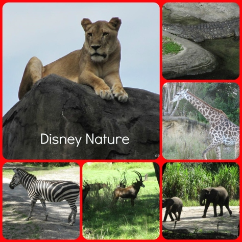 Disney Nature (422 Wordless Wednesday)